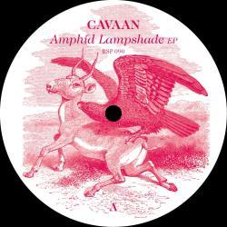 Amphid Lampshade